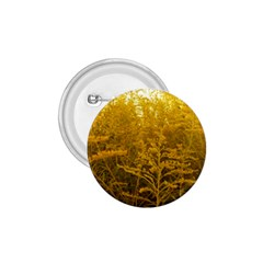Gold Goldenrod 1 75  Buttons