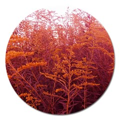 Red Goldenrod Magnet 5  (round)