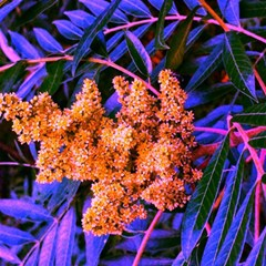Blue And Gold Sideways Sumac Magic Photo Cube