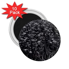 Black And White Queen Anne s Lace Hillside 2 25  Magnets (10 Pack)