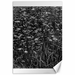 Black And White Queen Anne s Lace Hillside Canvas 12  X 18