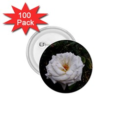 White Smooth Rose 1 75  Buttons (100 Pack)