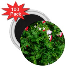 Red And White Park Flowers 2 25  Magnets (100 Pack)