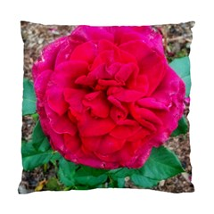 Folded Red Rose Standard Cushion Case (two Sides)