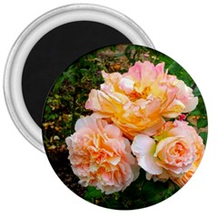 Bunch Of Orange And Pink Roses 3  Magnets