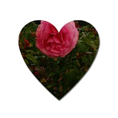 Round Pink Rose Heart Magnet by okhismakingart