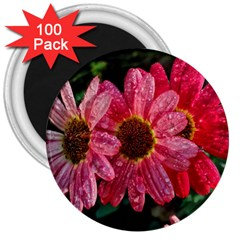 Three Dripping Flowers 3  Magnets (100 Pack)