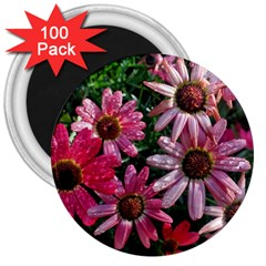 Pink Asters 3  Magnets (100 Pack) by okhismakingart