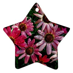 Pink Asters Star Ornament (two Sides)