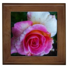 Spiral Rose Framed Tiles