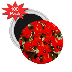 Columbus Commons Red Tulips 2 25  Magnets (100 Pack)