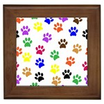 Pawprints Paw Prints Paw Animal Framed Tiles Front