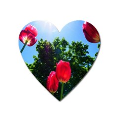 Skyward Tulips Heart Magnet by okhismakingart