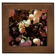 Pink Snowballs Ii Framed Tiles