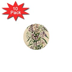 Botanical Print Antique Natural 1  Mini Buttons (10 Pack)
