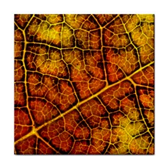Autumn Leaves Forest Fall Color Face Towel