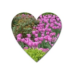 Late April Purple Tulip Heart Magnet by Riverwoman