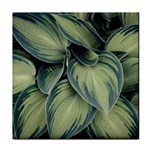 Closeup Photo Of Green Variegated Leaf Plants Tile Coasters Front