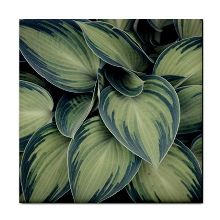 Closeup Photo Of Green Variegated Leaf Plants Tile Coasters