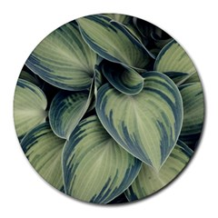 Closeup Photo Of Green Variegated Leaf Plants Round Mousepads by Pakrebo