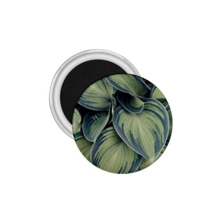 Closeup Photo Of Green Variegated Leaf Plants 1.75  Magnets