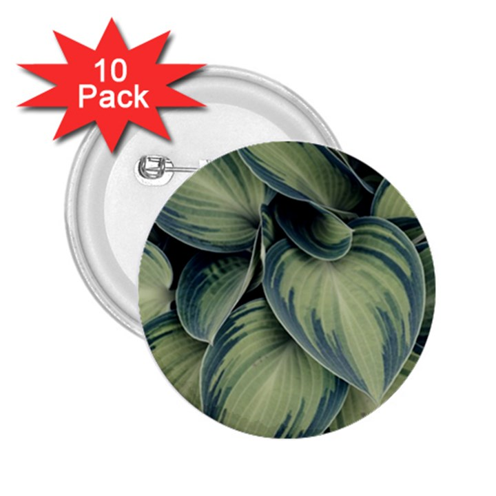 Closeup Photo Of Green Variegated Leaf Plants 2.25  Buttons (10 pack)
