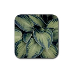 Closeup Photo Of Green Variegated Leaf Plants Rubber Square Coaster (4 Pack)  by Pakrebo