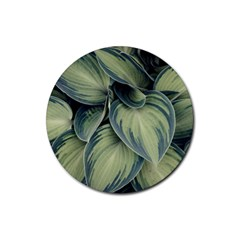 Closeup Photo Of Green Variegated Leaf Plants Rubber Coaster (round)  by Pakrebo