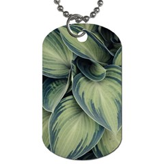 Closeup Photo Of Green Variegated Leaf Plants Dog Tag (one Side) by Pakrebo
