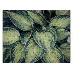 Closeup Photo Of Green Variegated Leaf Plants Rectangular Jigsaw Puzzl by Pakrebo