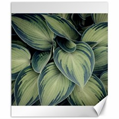 Closeup Photo Of Green Variegated Leaf Plants Canvas 8  X 10  by Pakrebo
