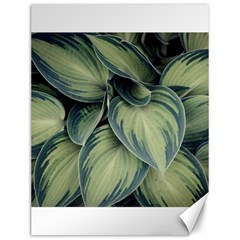 Closeup Photo Of Green Variegated Leaf Plants Canvas 12  X 16  by Pakrebo