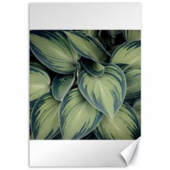 Closeup Photo Of Green Variegated Leaf Plants Canvas 12  X 18  by Pakrebo