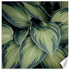 Closeup Photo Of Green Variegated Leaf Plants Canvas 16  X 16  by Pakrebo