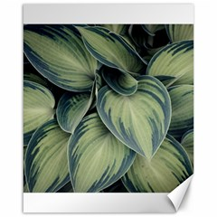 Closeup Photo Of Green Variegated Leaf Plants Canvas 16  X 20  by Pakrebo