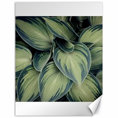 Closeup Photo Of Green Variegated Leaf Plants Canvas 18  X 24  by Pakrebo