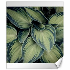 Closeup Photo Of Green Variegated Leaf Plants Canvas 20  X 24  by Pakrebo