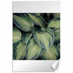 Closeup Photo Of Green Variegated Leaf Plants Canvas 20  X 30  by Pakrebo