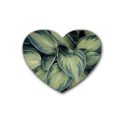 Closeup Photo Of Green Variegated Leaf Plants Heart Coaster (4 Pack)  by Pakrebo