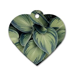Closeup Photo Of Green Variegated Leaf Plants Dog Tag Heart (one Side) by Pakrebo