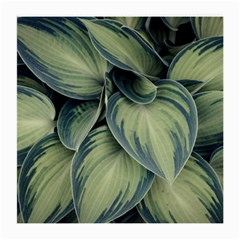 Closeup Photo Of Green Variegated Leaf Plants Medium Glasses Cloth (2 Sides) by Pakrebo