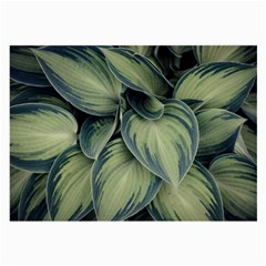 Closeup Photo Of Green Variegated Leaf Plants Large Glasses Cloth (2 Sides) by Pakrebo