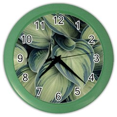 Closeup Photo Of Green Variegated Leaf Plants Color Wall Clock by Pakrebo