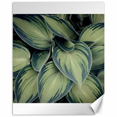 Closeup Photo Of Green Variegated Leaf Plants Canvas 11  X 14  by Pakrebo