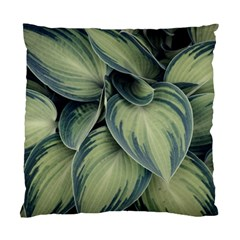 Closeup Photo Of Green Variegated Leaf Plants Standard Cushion Case (two Sides) by Pakrebo