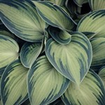 Closeup Photo Of Green Variegated Leaf Plants Magic Photo Cube Side 1