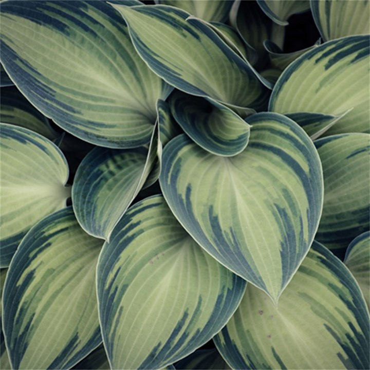 Closeup Photo Of Green Variegated Leaf Plants Magic Photo Cube