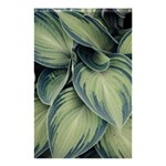Closeup Photo Of Green Variegated Leaf Plants Shower Curtain 48  x 72  (Small)  42.18 x64.8  Curtain