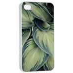 Closeup Photo Of Green Variegated Leaf Plants iPhone 4/4s Seamless Case (White) Front