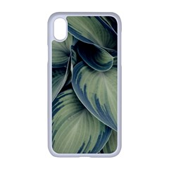 Closeup Photo Of Green Variegated Leaf Plants Iphone Xr Seamless Case (white)